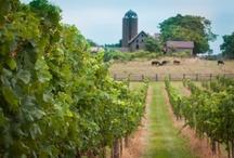 Virginia Wineries / by Kristin Hickey-Heydt