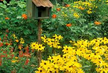 Birds and Bird Houses! / by Annmarie Wehler