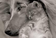 Animals / animaux / by Rebbecca Richmond