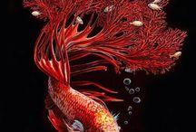 Ocean surrealism