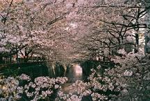 Japan ♥ / by Sheila Higgins