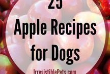 pet recipes