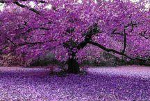 Amo Árvores