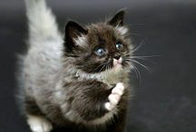 kittens / by Olivia Vomero