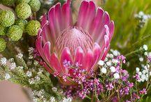 Fynbos ruikers