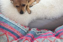 Pet photography / by Chelsi LaVigne