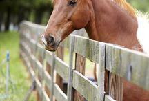 Horses, yes please!