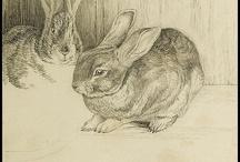 Beatrix Potter / by Kay Shelnutt