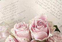 Rózsaszínek-Rózsák