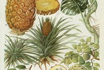 Drawings vintage botanical