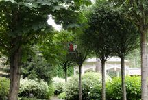 аллеи в саду