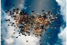 бабочки / красота, легкость, воздушность, очарование