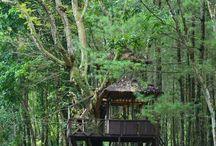 Wisata Hutan Pinus Songgon Banyuwangi