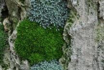 coolplants : alpines