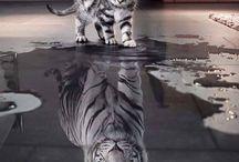 White Tiger - My Totem - Me