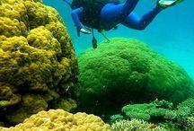 zee, duiken Sea diving