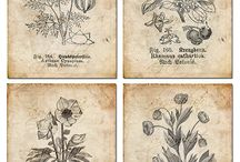 botanical iilustrations