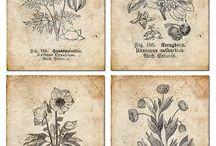 botanické ilustrácie