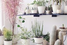 Indoor Plants! / by Courtney Scrabeck