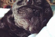 A. Pets especially Pugs / by Laura Smith