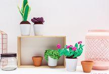 cactusa haken