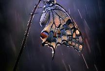 Butterfly- Pillangó