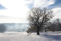 YSP: Winter