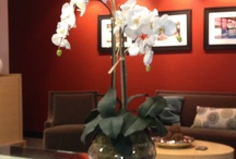 Spotted / Our artificial plants and trees and silk flowers spotted in the homes and offices of customers!
