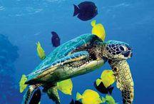 koralové utesy