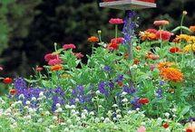 Kiva linnunpönttö kukkien keskellä