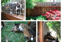 Cats and Outdoor Cat Enclosures