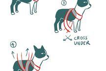 Собаки / О собаках, дрессировке, тренировке, интересных идеях