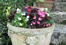 Bahçede saksı çiçekleri