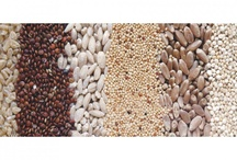 """FOOD: WHOLE GRAINS~SUPER FOOD / A grain is """"whole"""" when the entire grain seed is retained: the bran, germ and the endosperm. The bran and germ components are rich in fiber, vitamins, minerals, antioxidants, and healthy fats. These are the parts removed in the refining process, leaving behind the energy-dense but nutrient-poor endosperm portion of the grain. Examples of whole grain foods include wild rice, popcorn, oatmeal, brown rice, barley, wheat berries and flours such as whole wheat. / by Terri Strong Dufrene"""