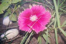 Flores, Plantas y Naturaleza
