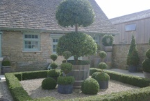 Boxwoods * Topiaries / by Therese Long