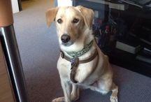 My tripod dog Amor! / My tripod dog