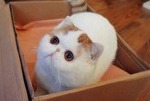 fat cute kitty's
