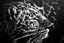 Animals / by Leah Robbins