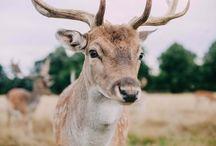 Me - Animalia / Real photos of real animals. No photoshop. No sculptures. No misinformation.
