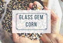 HEIRLOOM | corn