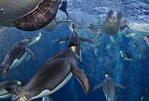 Wildlife pics / by Alec Caprari