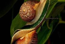 Snails / by Svetlana