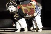 diy costumes animal