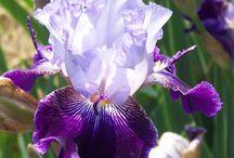 tek orkide