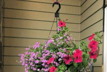 Hanging Baskets and Plant Booster / Examples of hanging baskets watered with the Plant Booster self-watering kit.