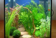 Akvarier & fisk