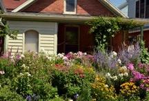 Grassless front yards #grasslessyard