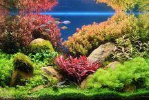 Aquarium bordje / Over aquaria natuurlijk