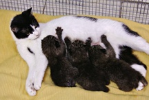 News & Updates / Read stories and information about animals at Suncoast Animal League.